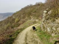 Weg parallel zum Rhein durch die Weinberge