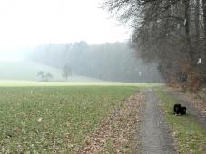Odenwaldlandschaft im Schneegriesel