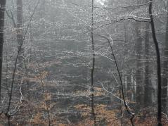 Der Graupel ist geschmolzen und klebt als Regentropfen an den Bäumen