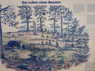 Infotafel im Wald von Remagen