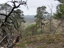 In der Kernzone des Naturschutzgebiets bleibt der Wald sich selbst überlasse