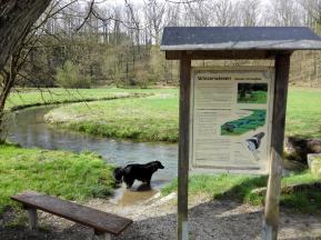 Doxi testet die Wasserqualität der Kainach