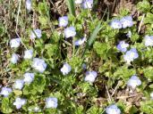 Die Bodendecker blühen schon
