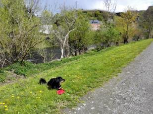 Doxi hat Spaß mit ihrem Frisbee