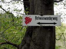 Unterwegs auf dem Rotweinwanderweg
