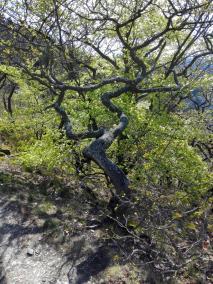 Bäume auf der Spitze des Schrocks. Ihr Wachstum zeigt: Hier ist es oft windig.