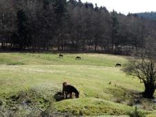 Pferdeweiden am Stutenhof