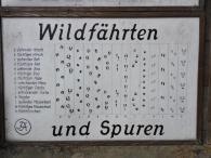 Wildfährten im Wald