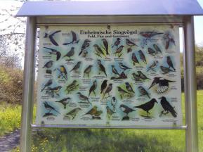Singvögel der Region: Infotafel am Wegesrand