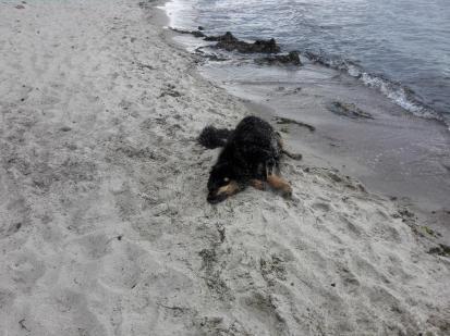 Erst mal das nasse Fell im Sand abschuggeln