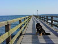 Doxi auf der Seebrücke