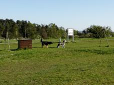 Doxi freundet sich mit einem DDR-Wachhund an