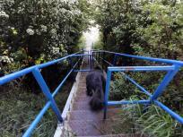 Doxi nimmt die steile Treppe hinunter zum Strand