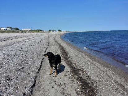 Am Strand von Fehmarn: Wann kommt denn endlich das Stöckchen geflogen?