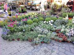 Pflanzenstand auf dem Markt an der Nikolaikirche