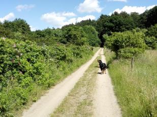 Rund um die Seen gibt es zahlreiche Wander- und Fahrradwege