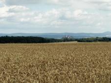 Blick über die reifen Kornfelder hinüber zum Schloss in 7 Km Entfernung