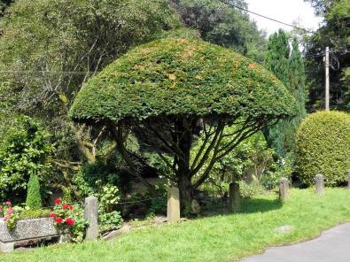 Schön geschnittener Baum in einem Garten nahe der Wupper