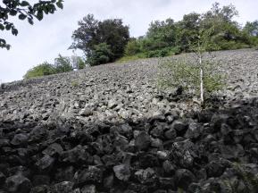 Ein steinernes Feld, auf dem kaum etwas wächst- mit Ausnahme einer einzelnen jungen Birke