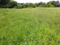 Blumenwiese in der Waldheide