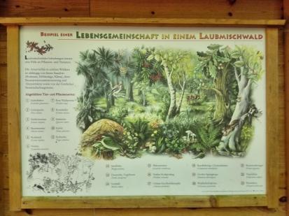 Infotafel zum Leben im Mischwald