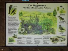 Am Rande des Waldes: Magerrasen, eine typische Landschaft im Altmühltal