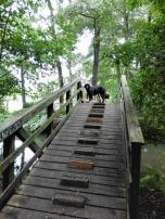 Typisch sind die vielen Holzbrücken über die Fließe mit Stufen in der Mitte