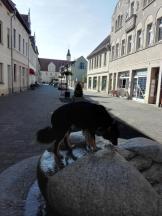 Doxi erfreut sich am Brunnen von Coswig