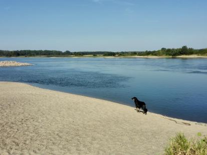 Doxi auf einer Sandbank am Ufer der Elbe