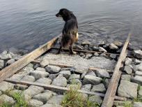 Doxi prüft erst Mal die Wasserqualität der Elbe.
