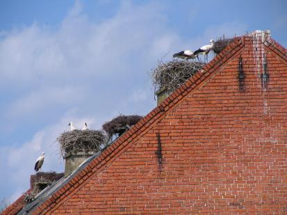 Da waren sie noch da: Die Störche von Rühstadt (Foto: Matthias Trautsch   http://commons.wikimedia.org   Lizenz: CC BY-SA 3.0 DE)