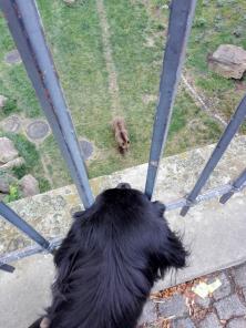 Doxi beobachtet ganz fasziniert die Bären