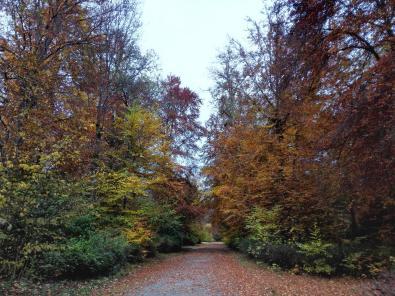 Breite Allee im Schlosspark