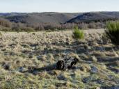 Blick Richtung Rursee (im Tal) und den dahinterliegenden Höhenzügen