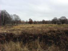 In der Drover Heide