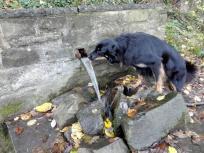 Doxi hat eine Wasserquelle entdeckt
