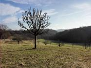 Schön geschnittene Obstbäume