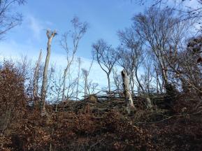 Oberhalb des Sees sind die Spuren des Orkans Kyrill von 2007 immer noch sichtbar