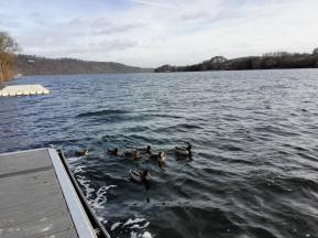 Zurzeit die einzigen Wassersportler auf dem See