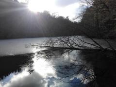 Der halbe Teich ist zugefroren
