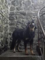 Doxi beim Aufstieg im Turm
