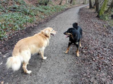 Doxi und Bellis spielen miteinander