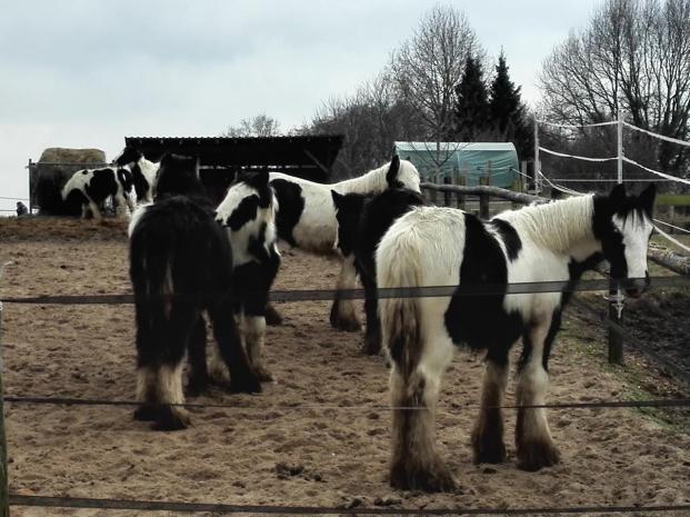 Hübsche Pferde, die sich gegenseitig putzen