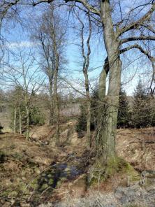 Tief im Arnsberger Wald