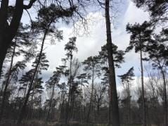 Im Hardter Wald
