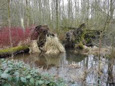 Weil die Gegend ganzjährig unter Wasser steht, hat sich eine Auenlandschaft gebildet