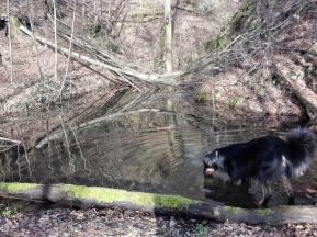 Doxi nimmt eine Wasserprobe