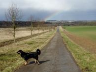 Ein Regenbogen am Ende des Weges