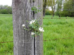 Aus diesem Weidepfahl wachsen Wildblumen