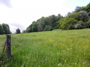 Am Waldrand blühen die Gräser